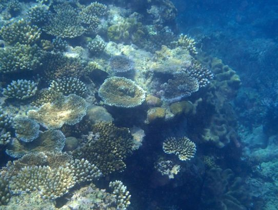 Great Barrier Reef – Part 2 of 2 (Coral of the Reef)