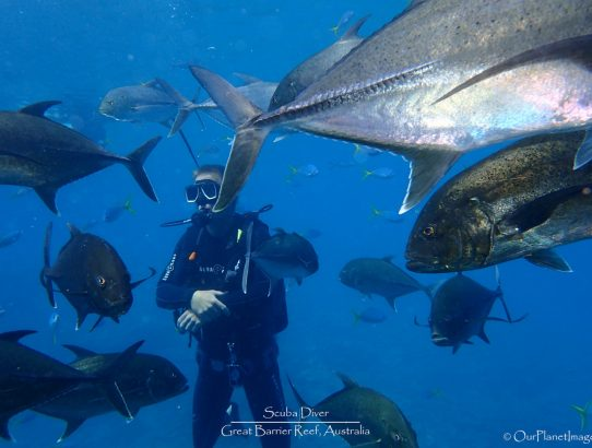 Great Barrier Reef – Part 1 of 2 (Fish of the Reef)