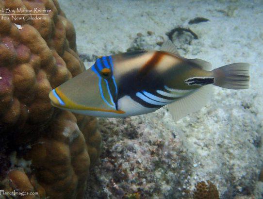 Jinek Bay Marine Reserve (Part 1) – New Caledonia