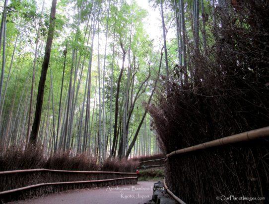 Arashiyama Bamboo Forest - Japan