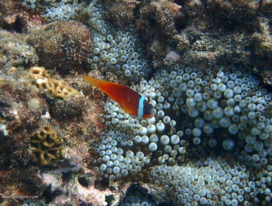 Snorkeling at Dravuni Island - Fiji Part 1 of 2