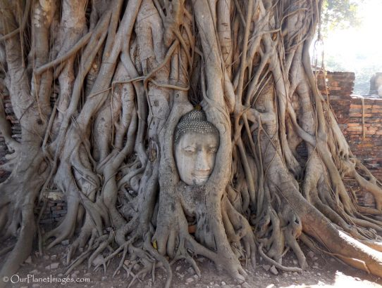 Wat Maha That - Thailand